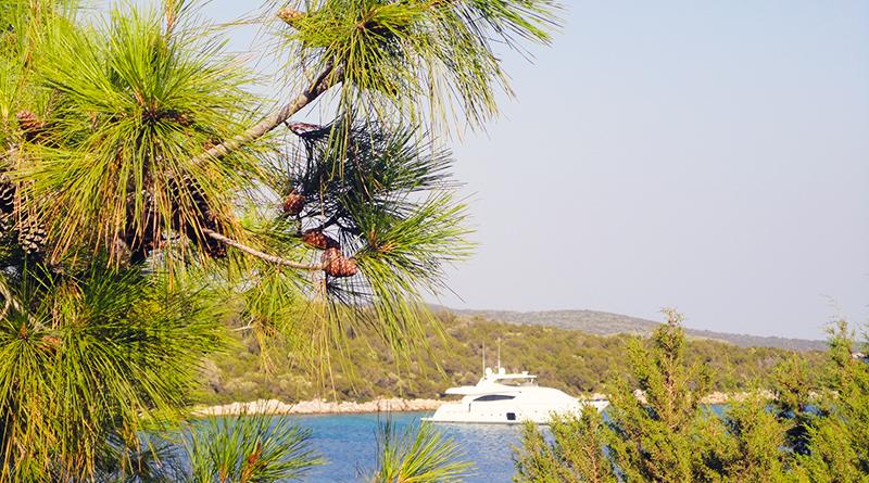 Четыре отеля с большой территорией и лесом на берегу моря